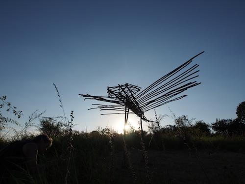 Dragon-fly / Foto: Gabriele Nippel