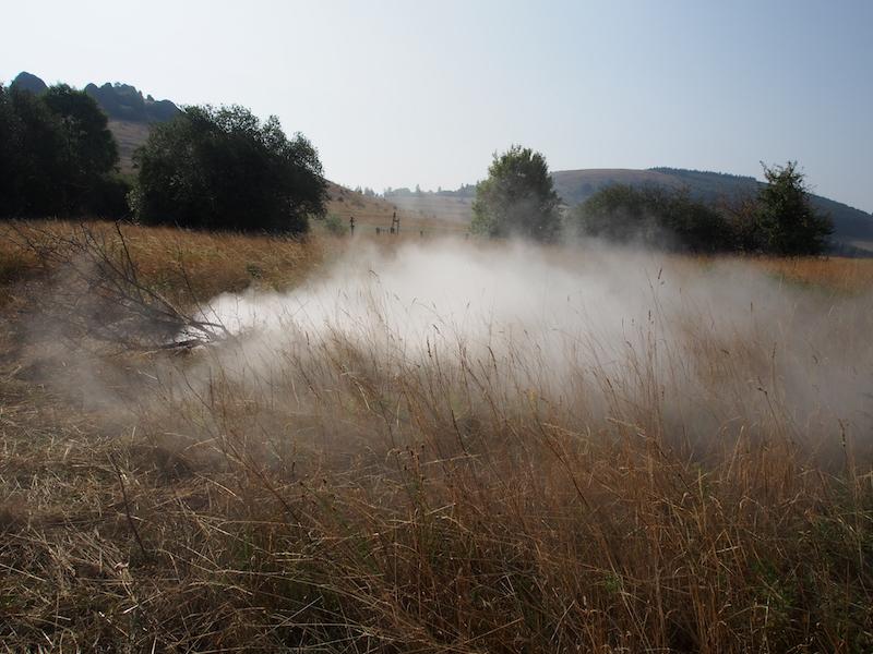 Cloud-Mead \ Nebel-Aue / Foto: Gabriele Nippel