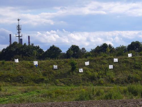 Die Antwort weiß nur der Wind 1-8 / Foto: Winfried Junker-Schönfelder