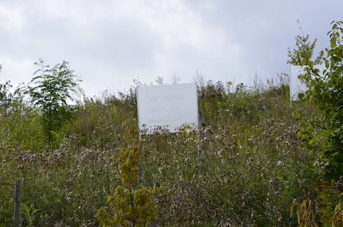 Die Antwort weiß nur der Wind 1-8 / Foto: Karin Franzisky